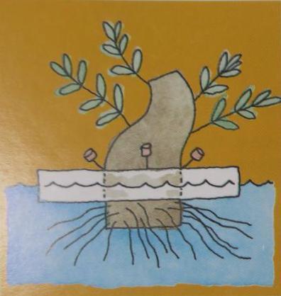 Trồng cây trên nước