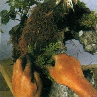 Đất trồng bonsai