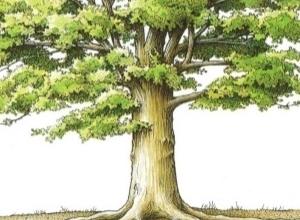 Thân bonsai