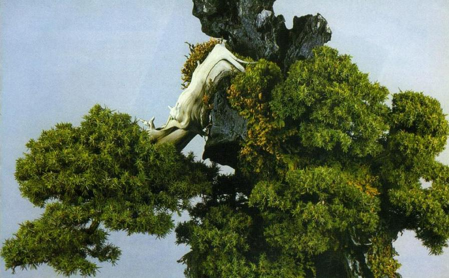 Trồng cây trên đá