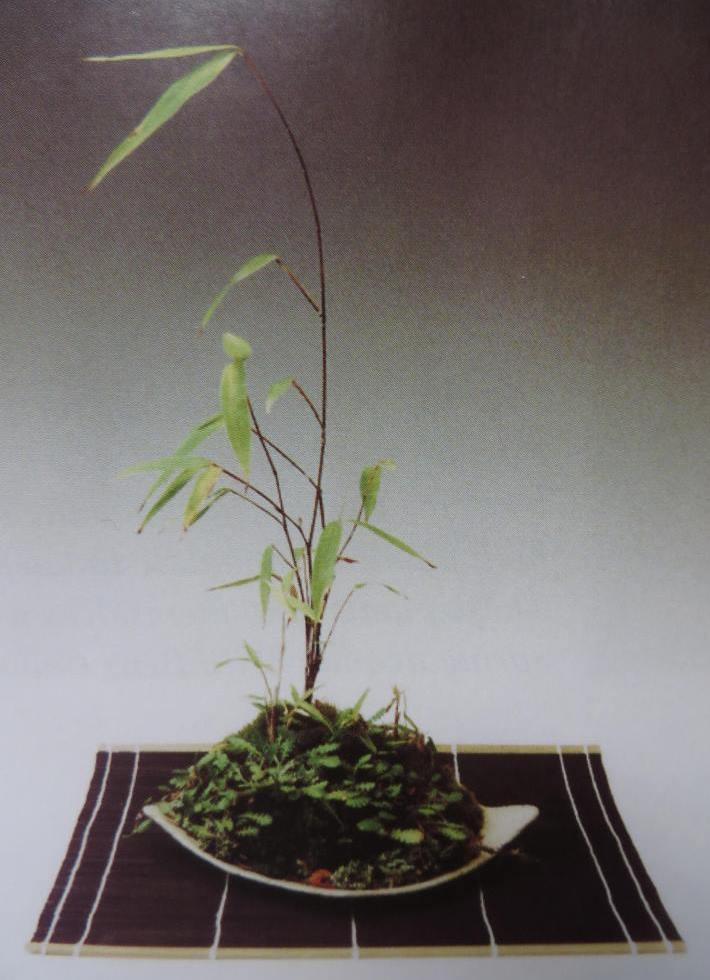 Cây cỏ phụ kiện bonsai